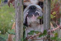 Bulldogs / by Christina Sanders
