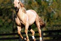Horses / Wild horses