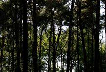 * Forêt *