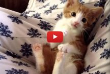 Cute Kitty Vids / Cute Kitty Vids... need I say more? ;) / by Angie Gaffke