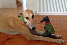 I Love Greyhounds / There is something about them!