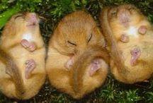 Hibernation preschool