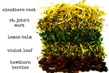 Herbs & Tinctures / by Stephanie Williams