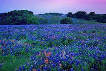 It's a Texas Thang! / Texas & Texans / by Dena Abney