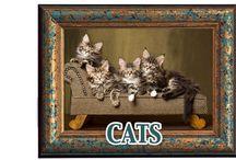 Cats / Alles voor uw Kat