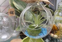 Air Plants / Air plants allow anyone to have a garden. These plants can be kept inside, or outdoors. The reason they are called air plants? They don't grow in soil! They are self sufficient and only need to be watered and soaked in a water bath a few times a week. They thrive in warmer weather, and can be kept in a variety of containers and spaces.