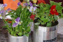 la tusen blomster blomstre / blomster til bord