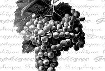 монохром вино-виноград