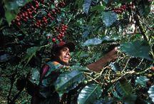 Fair Trade Research