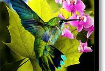 Birds ♡♥