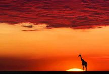 ~ Africa ~ / Snapshots from a diverse continent