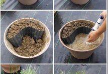 Nilüfer nasıl ekilir