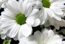 Flores para la decoración del hogar