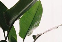 Leafff