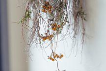 よりそう。|花と植物 / 当店でお取り扱いの花と植物たち。ドライフラワーが届いた先で、花と植物が奏でる、優しい時間が流れることを願っています。