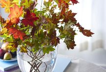 Fall Decorating / by Melissa Spence