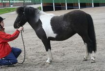 Tobianos - Roan Patches / The examples on this board have random roaned patches. Some have soft outlines, with white hairs spread elsewhere in the coat, while others have more defined outlines.