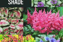 shady garden ideas