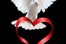 dove / Symbol of Holy Spirit ♡