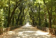 Giardini e Parchi di Napoli / Giardini e Parchi di Napoli - Parks and Gardens of Naples