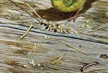 wielobarwne ptaki / ptaszarnia