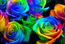 split stem roses