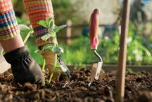 Gardeners / Bro4u presents Trained Gardeners Gardeners will visit and suggest/inspect designs and give you best quote Job will be picked by professionals upon confirmation