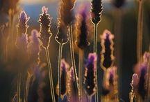 Photography ~WARM~ / Warm Photo Love