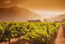 10 Best Napa Valley Wineries To Visit