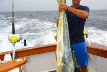 2013 Season Highlights: Blue Marlin and More! / Various photos of fishing action