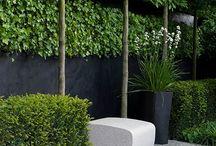 Outdoor courtyard garden