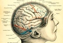 The Brain!