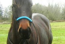Our Customers ~ HorseRopeConnection.com / Here are some pictures of some of our customer's beautiful horses! Send us a picture and we will post yours! We love sharing our customers' photos! www.horseropeconnection.com