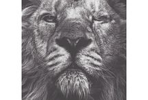 Lion of the Desert Boutique / Lion of the Desert Boutique's instore labels
