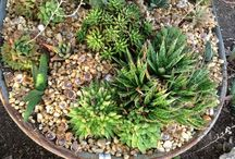 Wheelbarrow Planters / In this board we share some creative wheelbarrow planter ideas. Click follow to get inspired.
