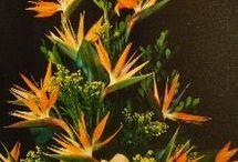 Birds of Paradise (Strelitzia)