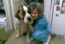 Cabinete veterinare Romania / Cabinete veterinare listate in Directorul Veterinar de pe veterinarul.ro