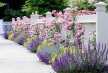 Reno garden