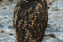 WHOO ARE YOU / by Carole Skewes