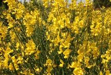 Fiori a colori / Fiori gialli, rossi, arancioni e in tutte le gradazioni delle piante descritte nel mio blog