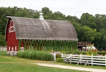 Barns / by Kathy Shay-Shapiro