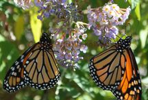 Butterfly are Free / Butterflies and friends around the nursery.