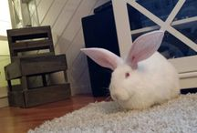 My bunnies