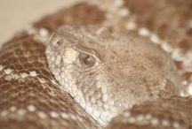 Schlangen  / Schöne Schlangen ?! ,schöne Bilder