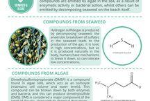Quimica dos aromas