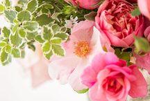 Dekoráció / Virágok