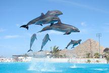 Los Cabos, Mexico Activities