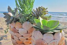 Plant pots from sea shells
