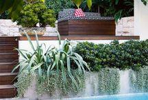 Cronulla Pools - plants