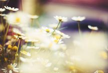 ♥ FLOWERS